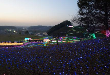 東京ドイツ村のイルミネーション1