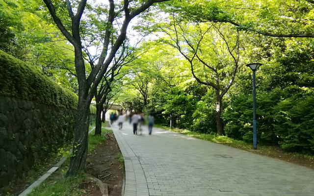 道なりに進んでいきます。新緑が気持ち良いですね(^^)