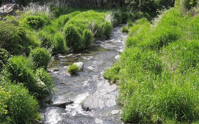 「釣り堀CAFE 二見」の隣には透き通った川が流れていて、川遊びをすることもできます